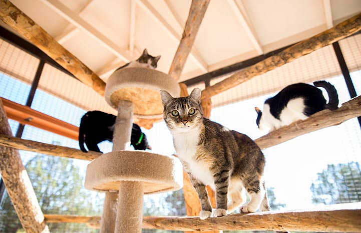 Kendra the cat at Best Friends Animal Sanctuary in Kanab, Utah