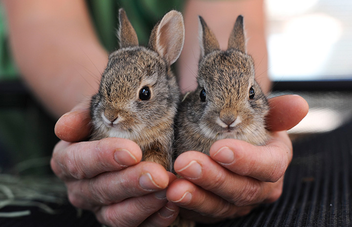 Who needs a bird in the hand? Bunnies are much better.