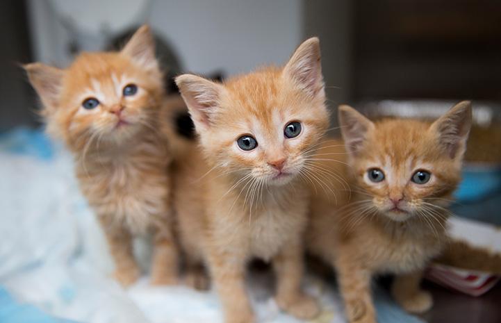 An orange trio of cuteness.