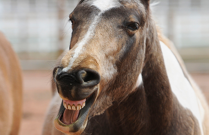 Horse with a big smile