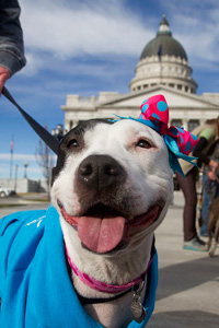 All dogs are individuals and deserve a chance for a happy life, including pit bull terriers