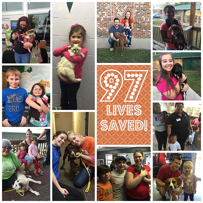 Photos collage showing Southern Pines Animal Shelter dog and cat adoptionss