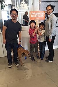 Coco the senior, three-legged Labrador retriever is adopted