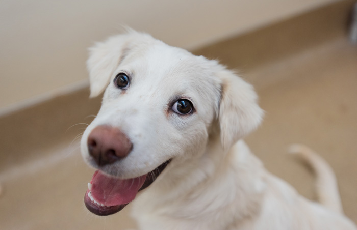 Keel the border collie mix puppy is all smiles