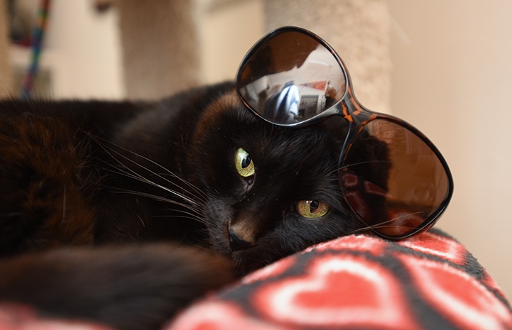 First day of summer, black cat in sunglasses