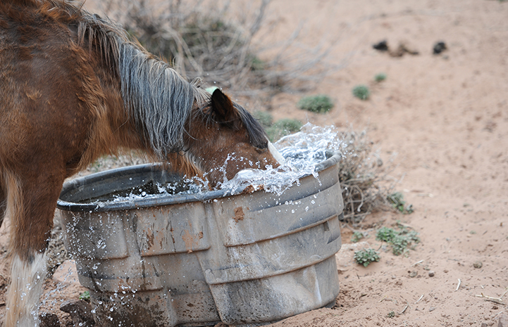 First day of summer, Star the horse with his head in a water trough