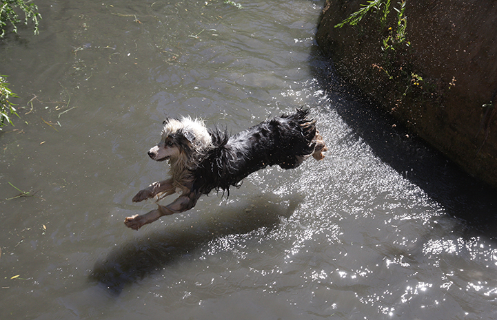 First day of summer, dog jumping into a creek