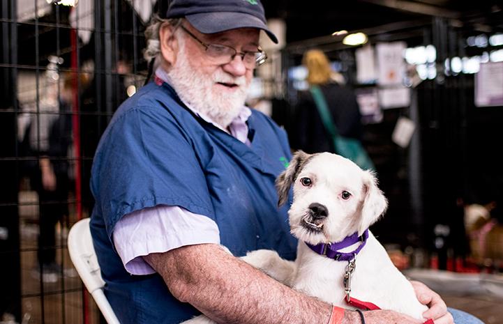 ARF volunteer at the New York Super Adoption