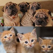 Super Bowl of Cuteness