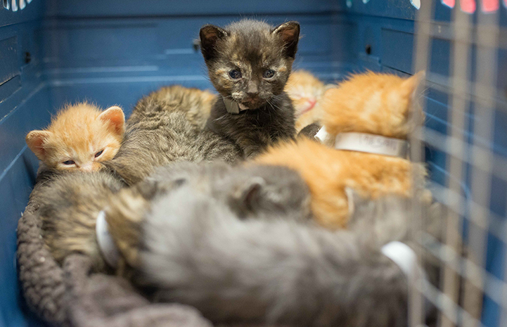 When the kittens are old enough that they no longer have to nurse, they will be spayed or neutered, vaccinated and microchipped