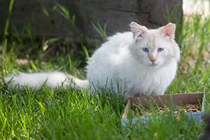 Community cat in Layton, Utah, helped by McKenzie Howard and NKUT