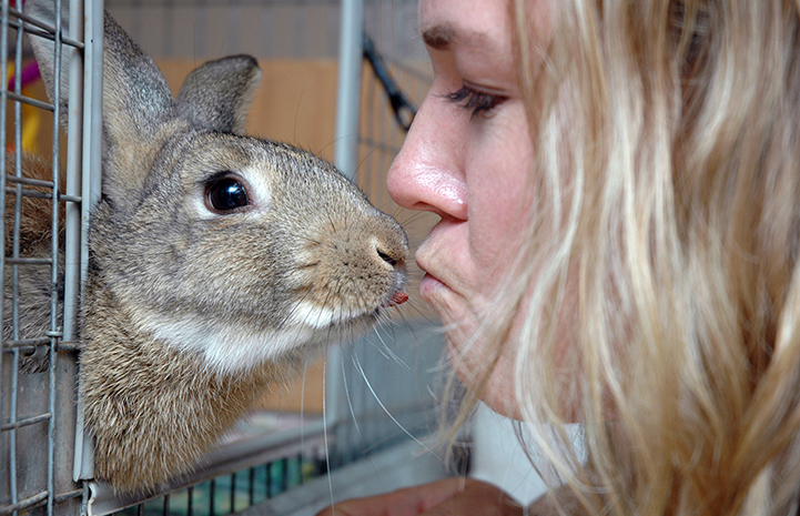 Rabbit grateful for kisses at Thanksgiving