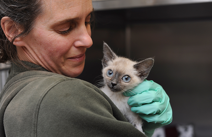 Kitten thankful for medical care at Thanksgiving