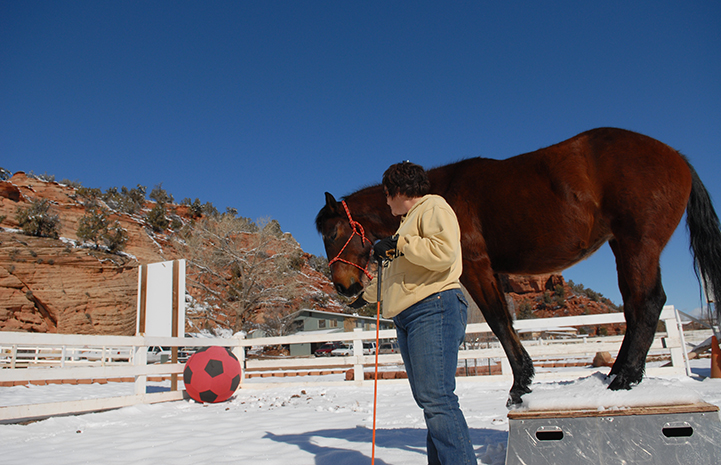 Horse thankful for Parelli training at Thanksgiving