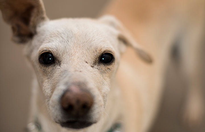 Once distant and unsocialized, Ando the terrier mix has changed dramatically