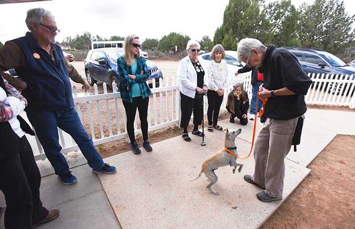 Ando transformed from a shy dog to a social butterfly who happily greeted Dogtown tours