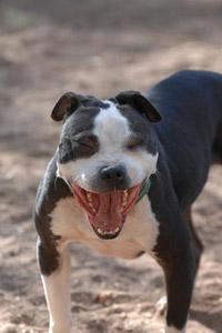 Oliver the Vicktory dog enjoying life