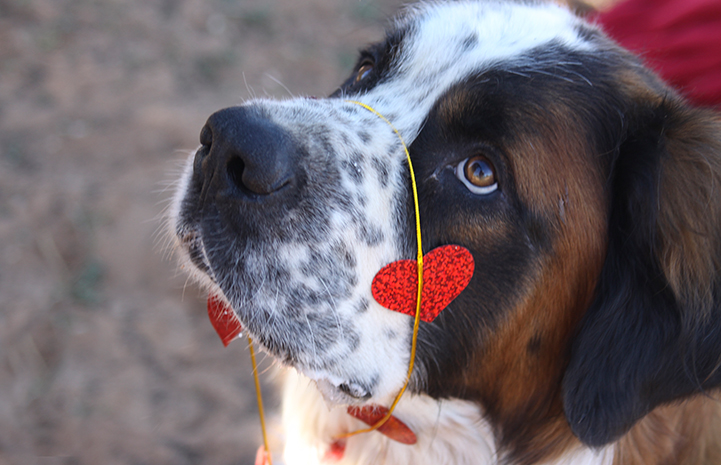 Some folks wear their hearts on their sleeves. I prefer to wear mine on my nose.