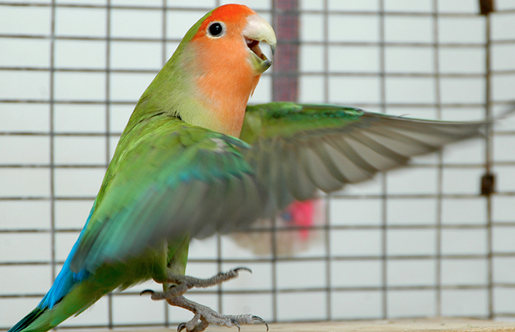 Did someone say lovebird?