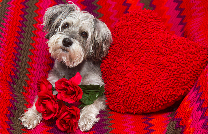 Roses are red, violets are blue. Please choose adoption, when you add to your zoo.