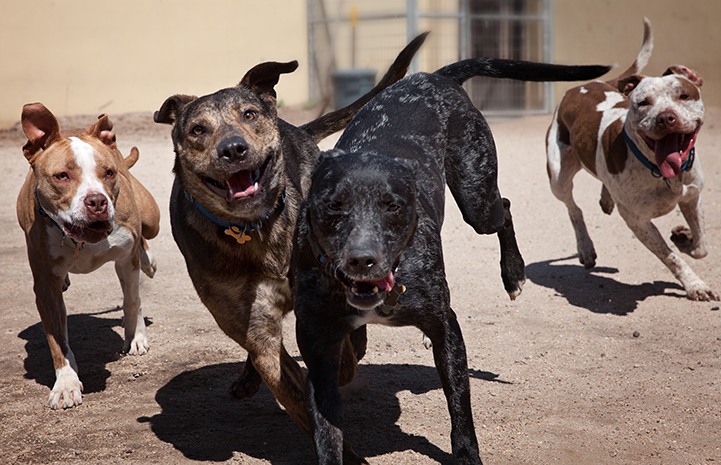 Dog playgroup in Los Angeles