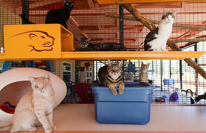 Several felines at Cat World at Best Friends