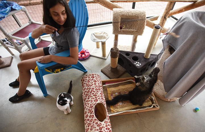 Hailey Shah volunteering at Cat World