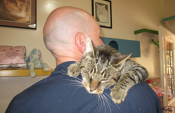 Volunteer Howard Haber with Belinda the cat