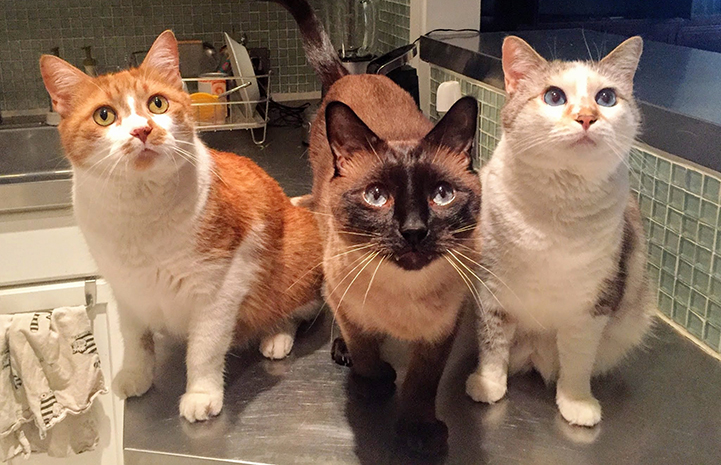 Karin's cats: Eli, Penny and Pistachio