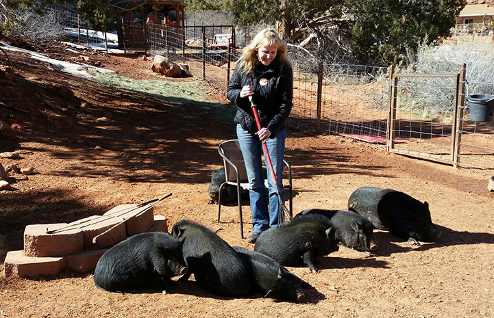 Jody Peterson giving a rake back scratch to one of the pigs