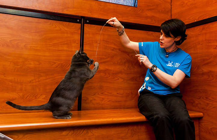 Volunteer Stephanie Etherton playing with Petunia the cat