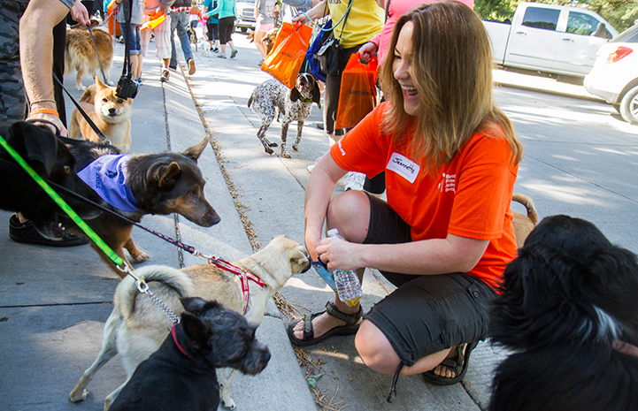 Volunteer distributing treats to the dogs during Strut Your Mutt