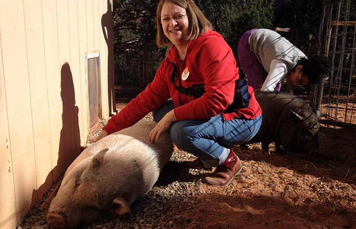Volunteer Tracey Lacka volunteering at Piggy Paradise with Oliver