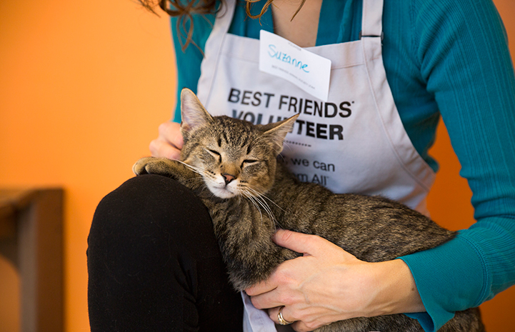 Volunteer holding a brown tabby cat on her lap