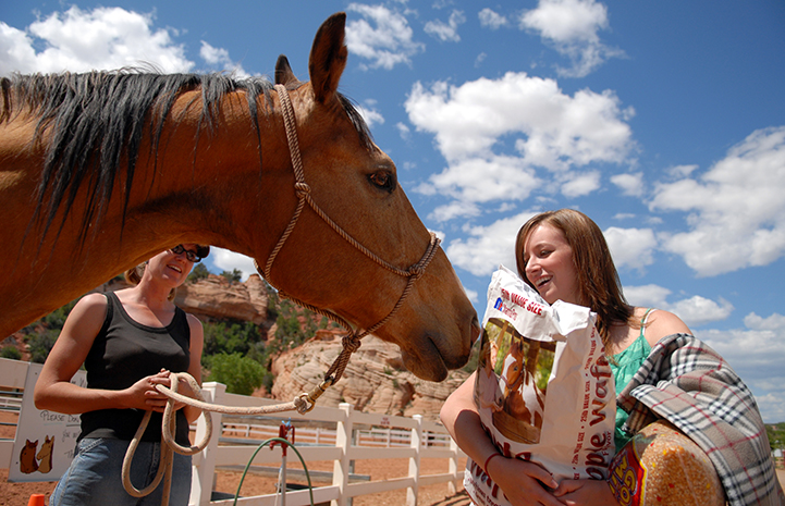 Volunteer bringing food to the horses