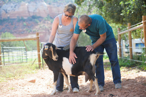 Valerie Andres and Andy Sontoski with Dreama the goat