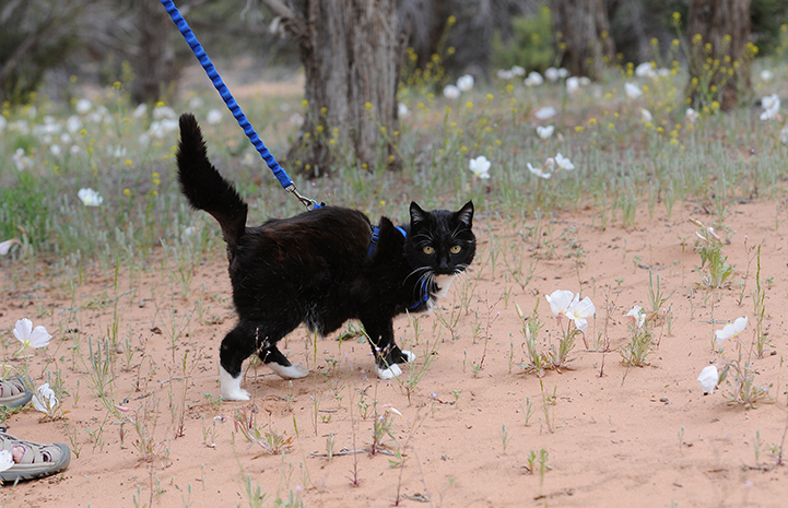 Walking the Dog Day? What about Walking the Cat Day?
