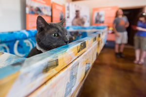 Wrinkles the Russian Blue cat thinks the Hurricane Katrina commemorative ARK was build for him