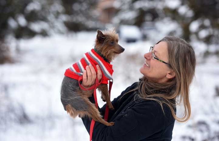 Milky Way the Yorkshire terrier on his way to Dogtown's training and agility building