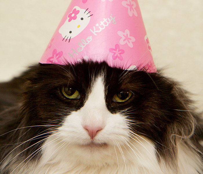 Tuxedo cat wearing a pink party hat