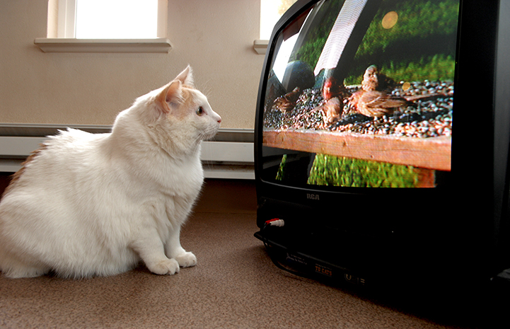 I resolve to watch less television.
