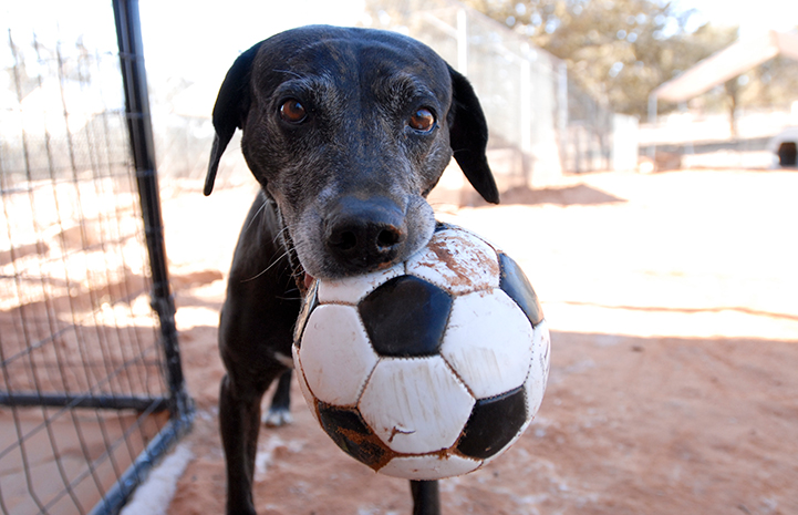 Celine the dog with a soccer ball in her mouth