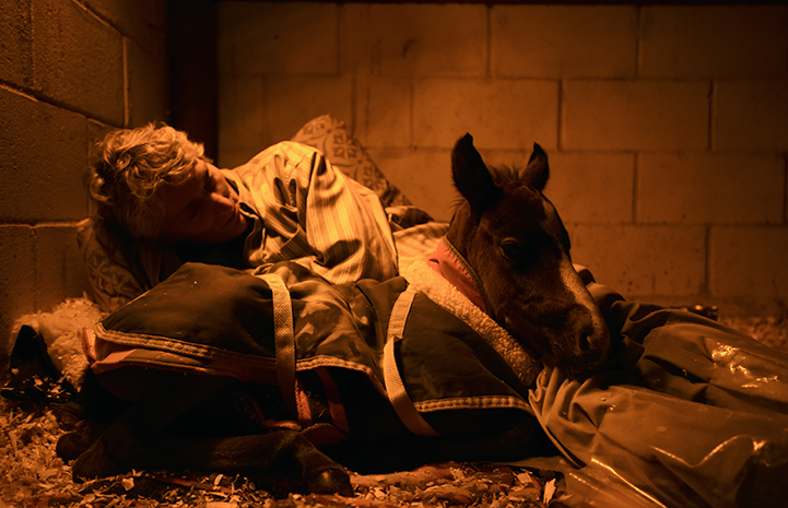 Linda snuggling with Prince the baby horse at night