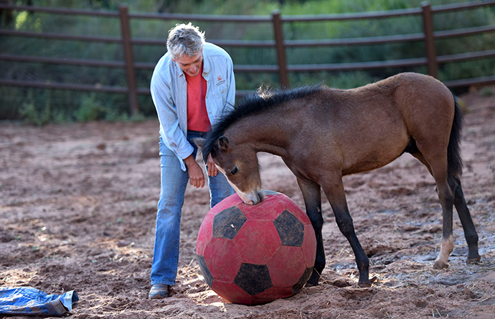 Linda with Prince the foal playing with a ball