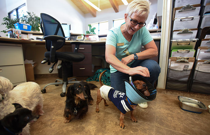 Dixon the dachshund helped at the front desk at the clinic