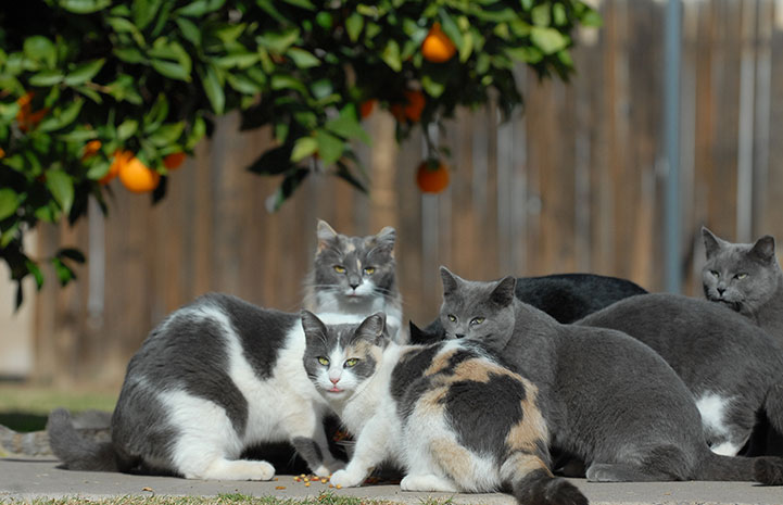 Community cats eating under an orange tree