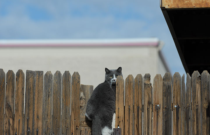 Community cat on a fence