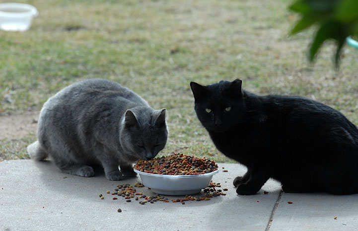 Two community cats eating