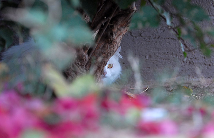 Community cat hiding behind a bush