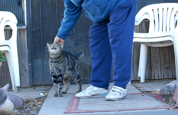 Caregiver petting a community cat